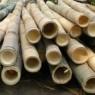 bambu batang