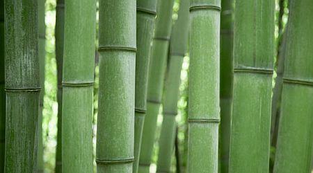 Pengawetan Bambu Sistem Perendaman Permethrin